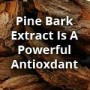 Pine Bark Extract Is A Powerful Antioxdant